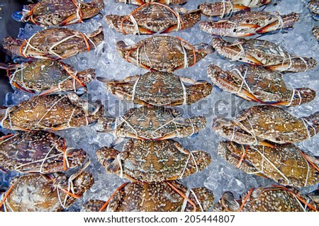 Crab in the market - stock photo