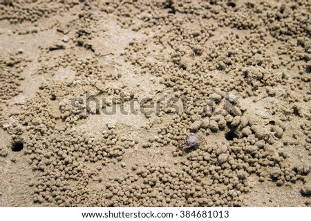 Crab,Ocypode ,Wind crab are playing on the sand art - stock photo