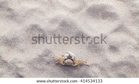 Crab on beach sand for summer and beach concept. Studio shot beach background. - stock photo