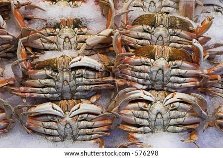 Crab on sale - stock photo