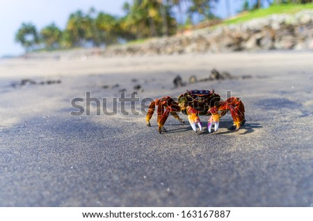 crab on the tropical island - stock photo