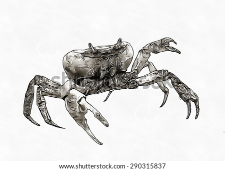 Crab pencil sketch - stock photo
