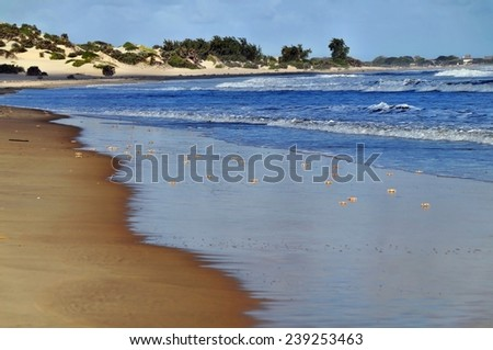 Crabs reflected in water of Shela Beach in Lamu, Kenya - stock photo