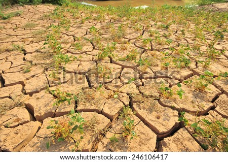 Crack dry land with some plants growing on  - stock photo