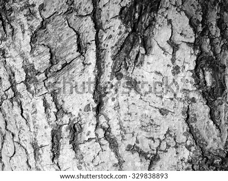 crack on gray tree bark texture - stock photo