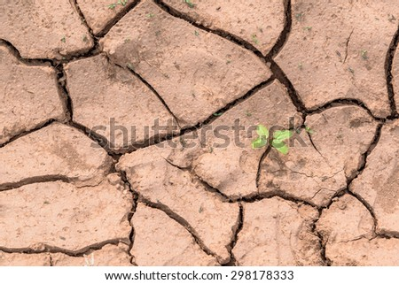 Cracked Clay Ground into the Dry Season. - stock photo