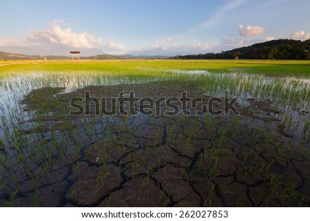 Cracked soil at a paddy field in Kota Belud, Sabah, Borneo, Malaysia - stock photo