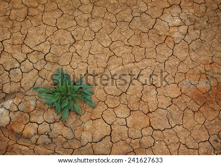 Cracked soil background with young plant - stock photo
