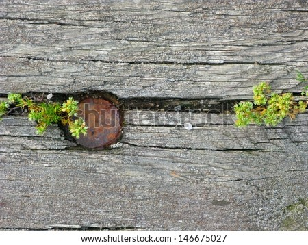 Cracked wooden texture with weeds growing for use as background - stock photo