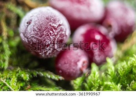 Cranberry frost moss. Berries are on the bark of a tree. Hoarfrost, Snow on the berries. Natural background. Macro background. - stock photo