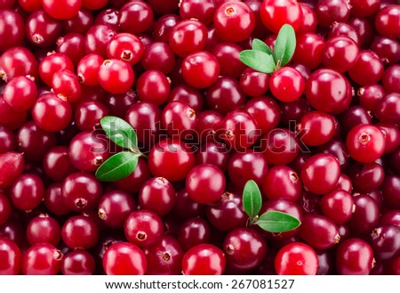 Cranberry with leaves. Red background. - stock photo