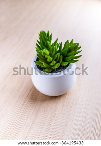 Crassula is a large genus of succulent plants containing many species, including the popular jade plant, Crassula ovata. - stock photo