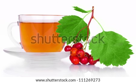 Crataegus tea with herbs and berries of the hawthorn with bright green leaves in a clear plastic Cup with saucer isolated on white background - stock photo