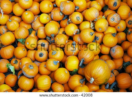 Crate full of pumpkins at a local farm - stock photo