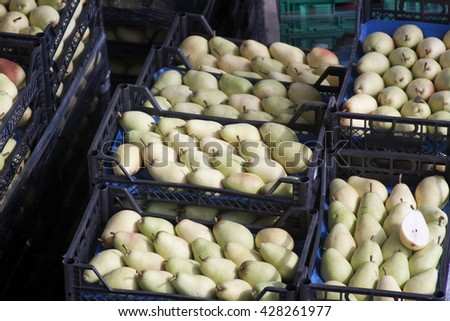 Crate of Pears ready to be shipped to market - stock photo