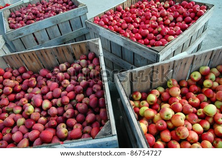 Crates of Freshly Picked Apples - stock photo