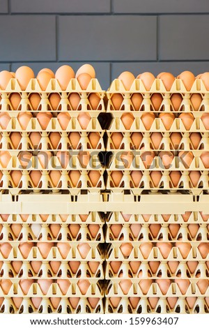 Crates with fresh eggs in front of a grey wall on an organic chicken farm - stock photo