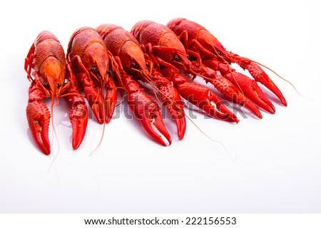 Crawfish on the white background - stock photo