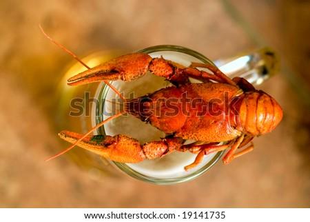 crawfish with beer - stock photo