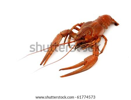 crayfish on white - stock photo