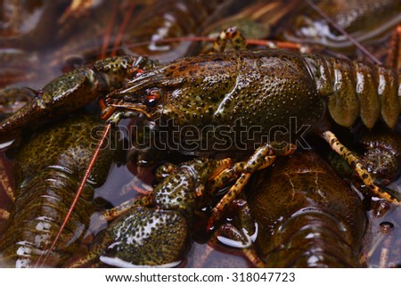 Crayfish texture - stock photo