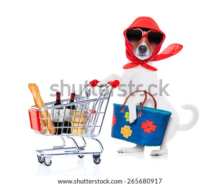 crazy and silly  jack russell dog diva lady with bag pushing  full of products supermarket cart , isolated on white background - stock photo