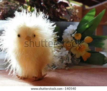 Crazy Chicken - stock photo