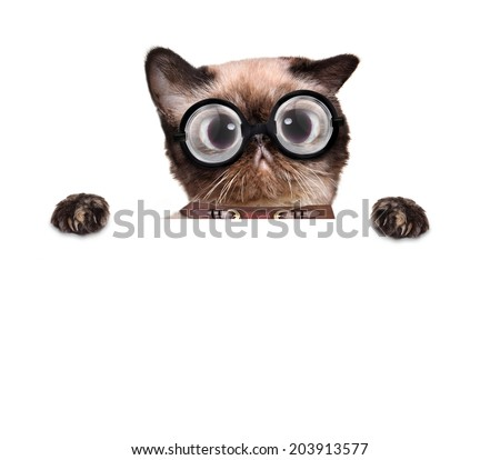 crazy silly cat with funny glasses behind blank placard - stock photo