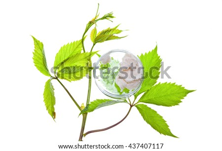 cream and green leaves - stock photo
