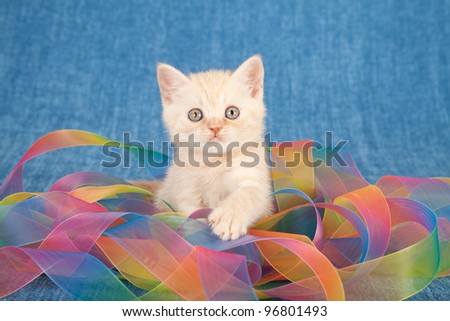 Cream kitten wrapped in colorful tie dye ribbons on blue background - stock photo