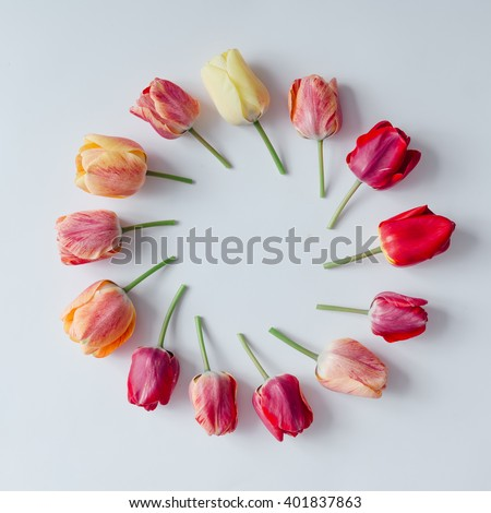Creative arrangement of tulip flowers on bright background. Flat lay. - stock photo