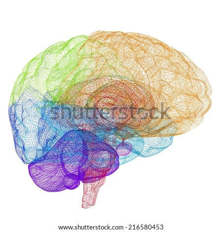 Creative concept of the human brain - stock photo