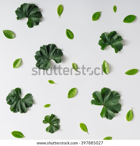 Creative natural pattern background made of leaves. Flat lay. - stock photo