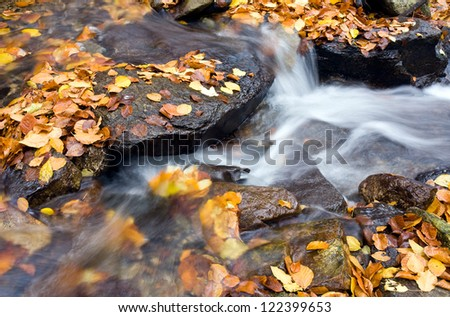 Cree in october - stock photo