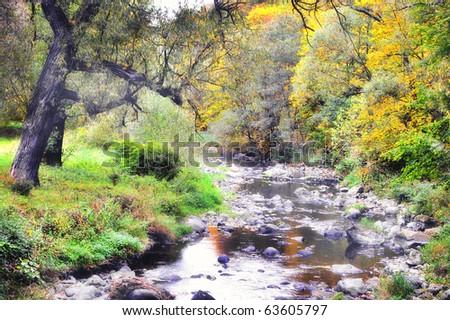 creek in fall time - stock photo