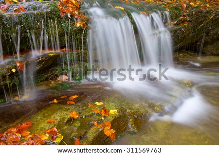 Creek in Irati Jungle, Pyrenees, Navarre, Spain. - stock photo