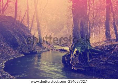 Creek on national park - stock photo