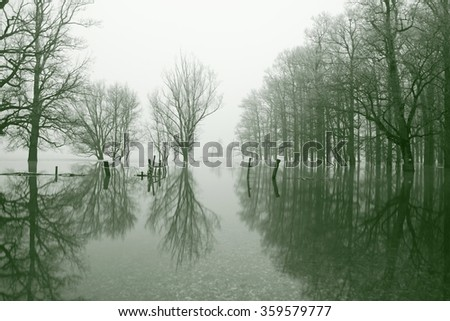 Creepy forest in flood - stock photo