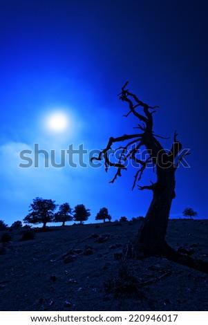 creepy tree at night with moonlight - stock photo