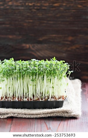 Cress on a rustic wooden table.Selective focus. - stock photo