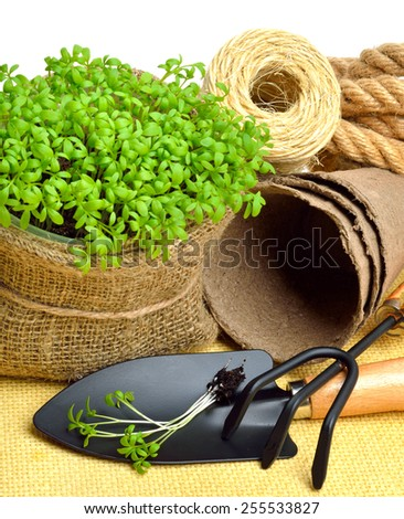 Cress salad on the flower bed with rake, shovel, peat cups, rope isolated on white   - stock photo