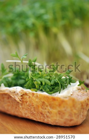 Cress with bread - stock photo