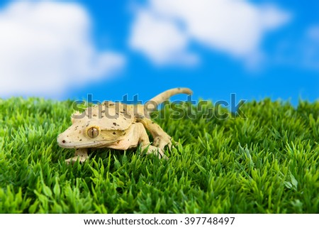 """Crested gecko standing on some grass with blue sky and the saying, """"A journey of a thousand miles begins with a single step"""" - stock photo"""
