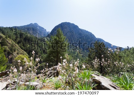 Crete - Greece - Blooming landscape of the Samaria Gorge - stock photo