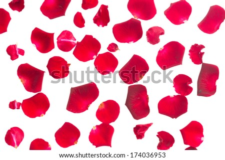 crimson red rose petals isolated on white background - stock photo