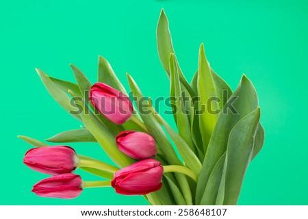 Crimson tulip flower on green background - stock photo