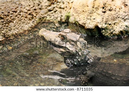 Croc near the water's edge - stock photo