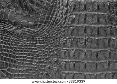 crocodile bone skin texture background. - stock photo