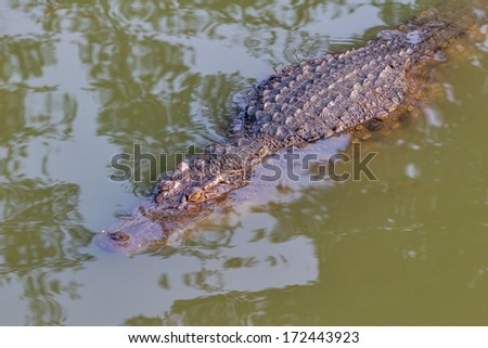 crocodile in the zoo Thailand - stock photo