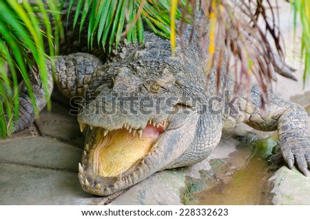 crocodile lies with open mouth under green leaves - stock photo